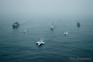 seashepherd5